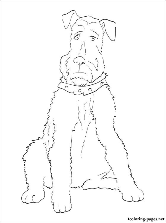 Airedale Terrier Coloring Page Coloring Pages