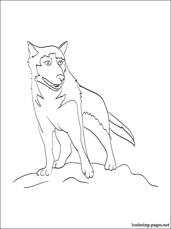 Alaskan Husky Coloring Page Coloring Pages