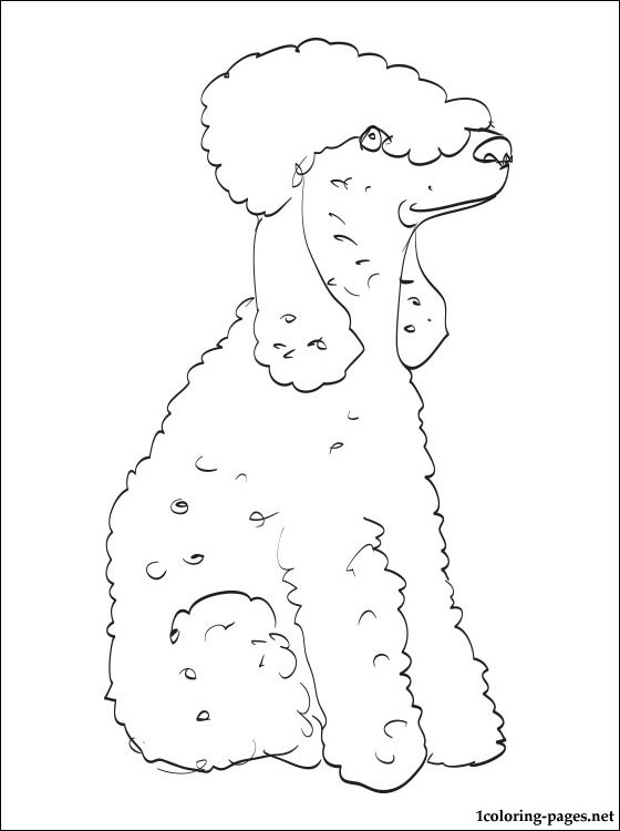 Bedlington terrier coloring page coloring pages, love birds coloring pages