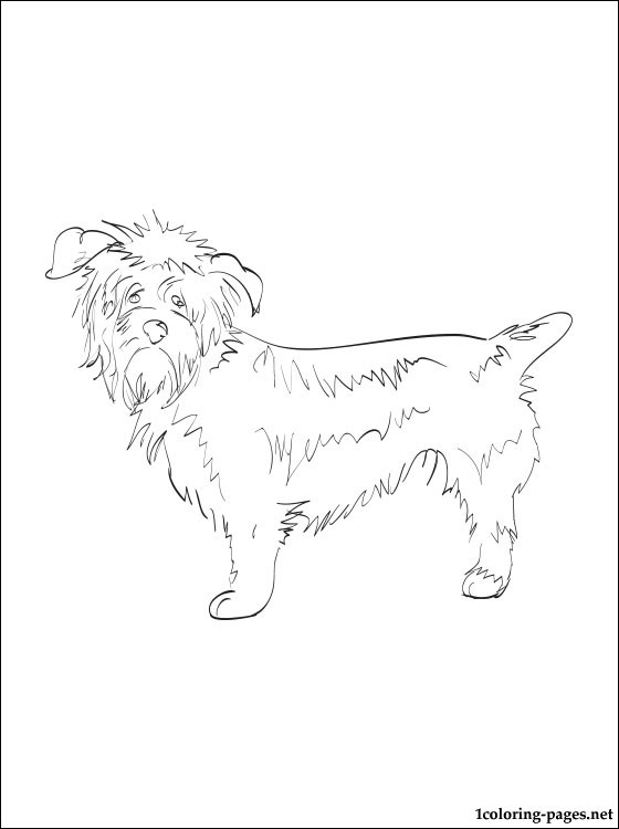 Glen Of Imaal Terrier Coloring Page Coloring Pages