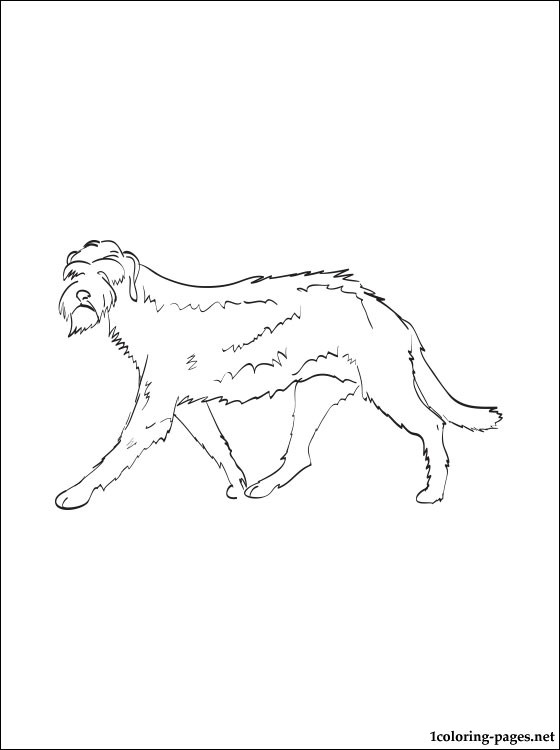 Irish Wolfhound Coloring Page Coloring Pages