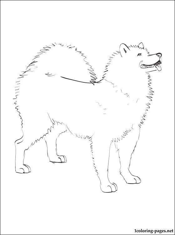 Samoyed Coloring Page Coloring Pages
