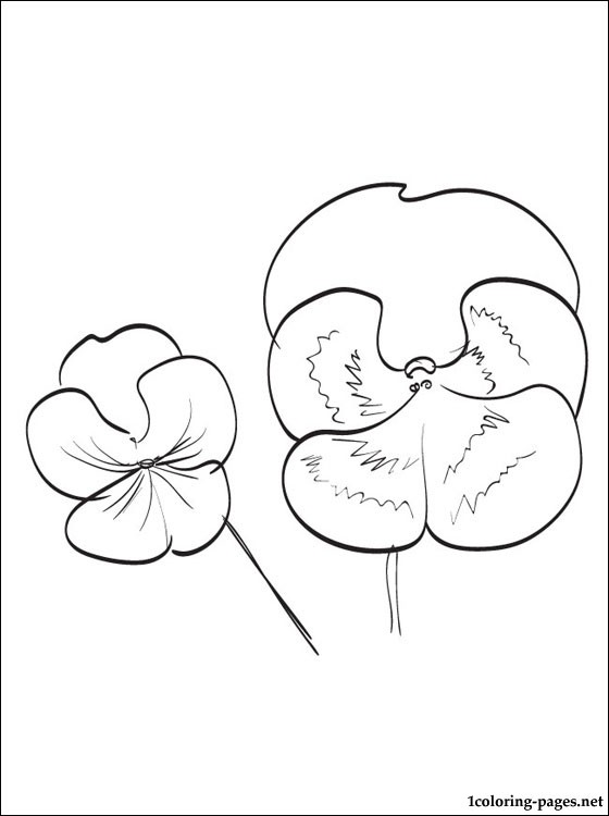 Pansy coloring and printable page coloring pages, love birds coloring pages