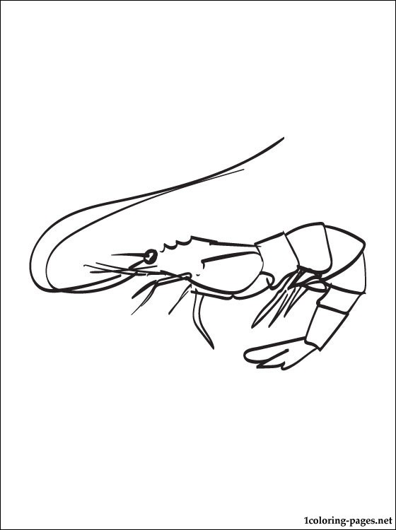 Shrimp Coloring Page Coloring Pages