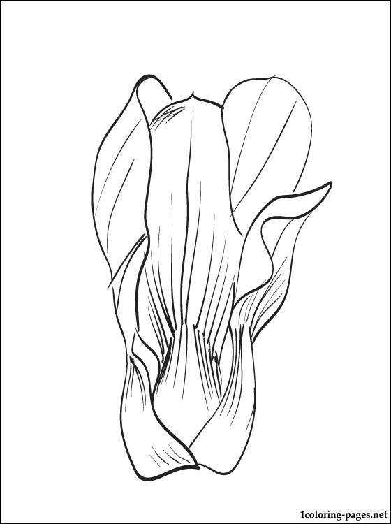 Coloring Page Bok Choy Coloring Pages