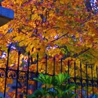 Hojas de otoño...