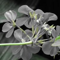 Una flor..., abstracta...