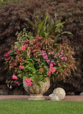 Кадочные растения