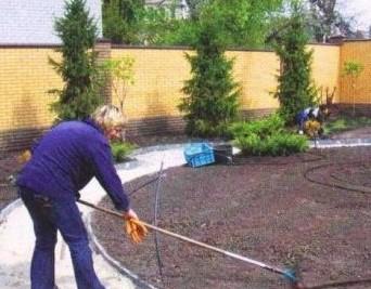как вырастить газон на даче
