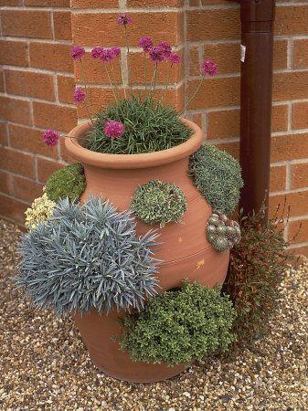 Найдено на сайте gardeningforyou.pw