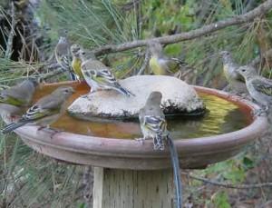 Купальня чаша для птиц