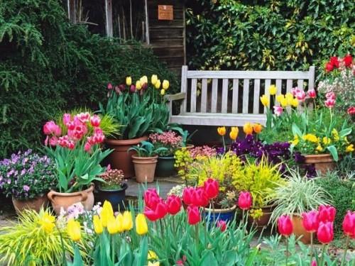 Тюльпаны в кадках