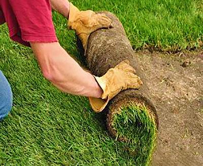 Когда лучше всего стелить рулонный газон