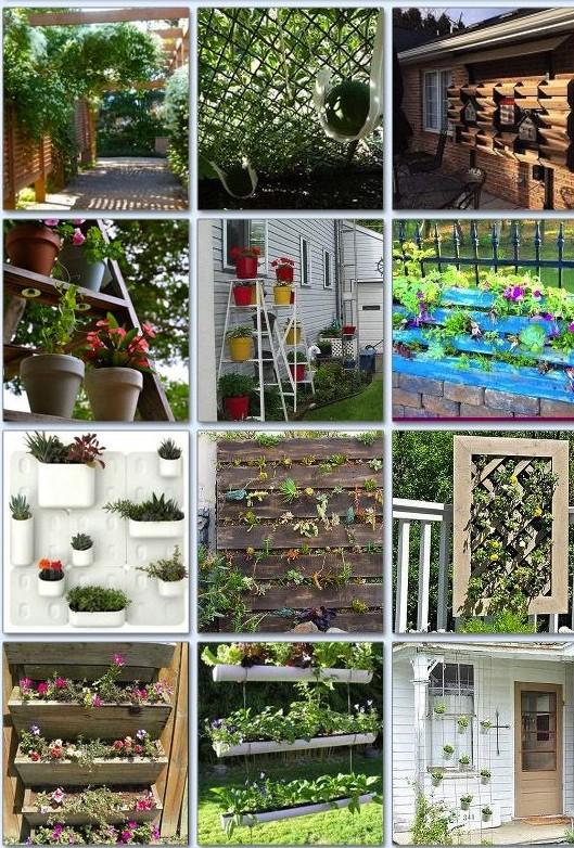 Идеи вертикального озеленения