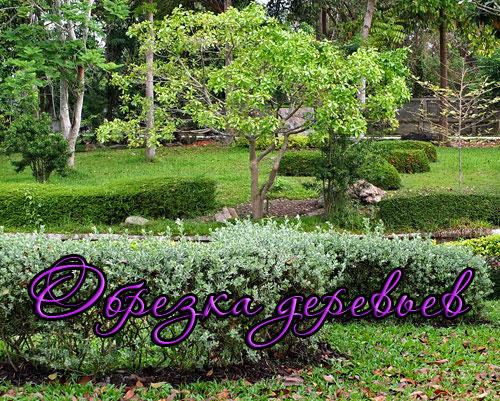 Обрезка плодовых деревьев и кустарников