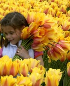Тюльпаны спорты от сорта Темпл оф Бьюти