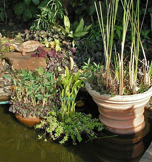 дизайн садового пруда фото 3