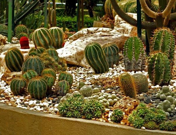 композиция из кактусов фото 1
