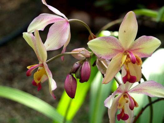 цветы орхидеи фото