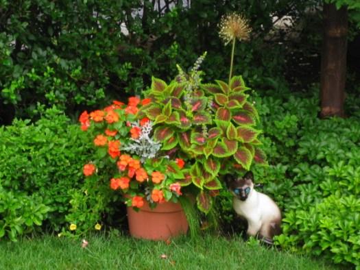 красивые уголки сада - кадочные растения