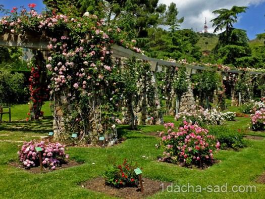 красивый розарий фото (11)
