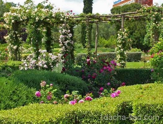 красивый розарий фото (10)