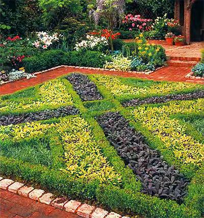 растения для бордюра