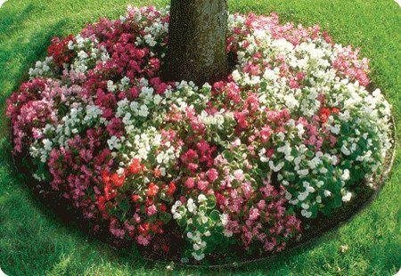 Что посадить под деревом - клумба из цветов
