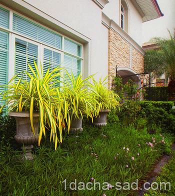 Большие растения в кадках перед домом