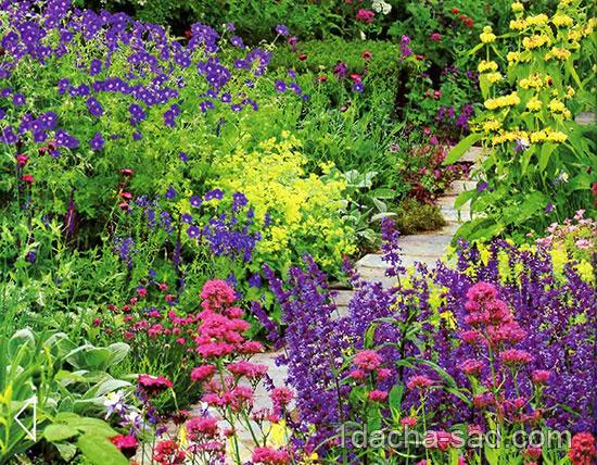 Цветущие садовые многолетники 1