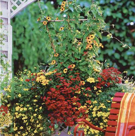 Ампельные цветы в озеленении балконов и террас 7
