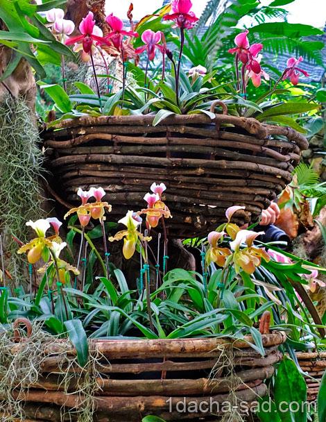 красивый сад Mae Fah Luang (14)