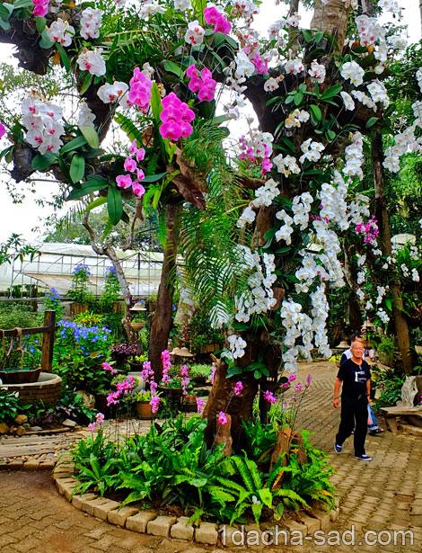красивый сад Mae Fah Luang (13)