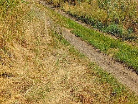 Вся трава желтая