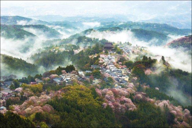 Spring-in-Japan-3