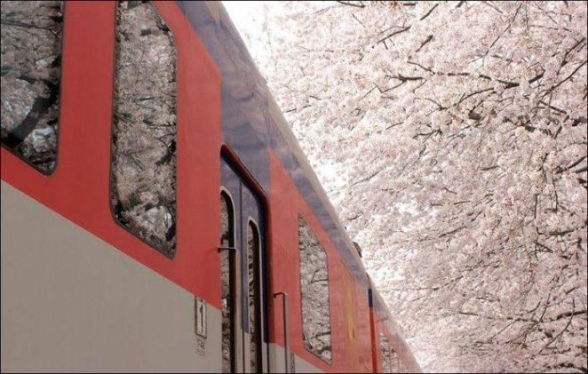 Spring-in-Japan-8