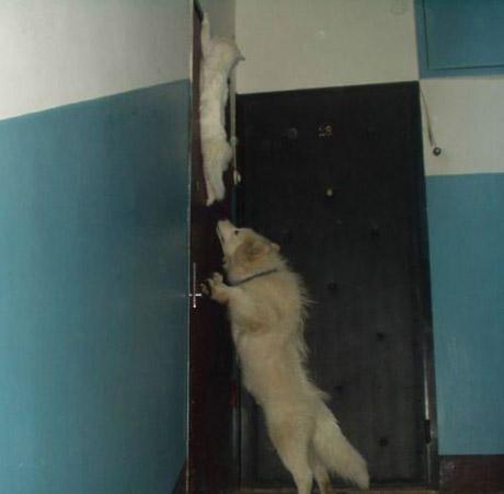 catanddogstories18ln3.jpg