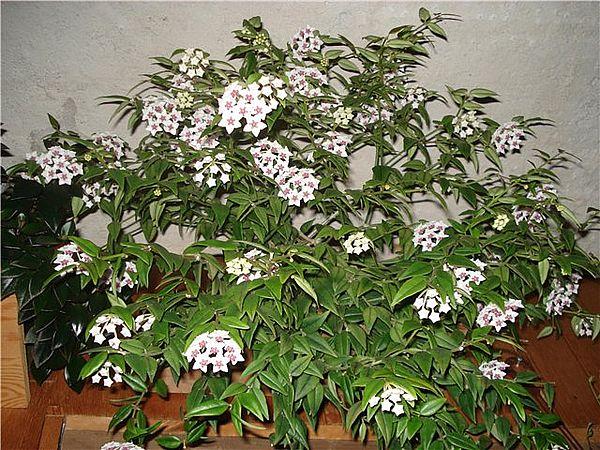 Тенелюбивые комнатные растения названия и фото ...