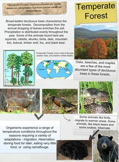 The temperate deciduous forest biome has four seasons of winter, spring, summer and fall. Temperate Forest Animals Broad Leafed Ecosystem En Forest Hibernation Migration Science Science Science Glogster Edu Interactive Multimedia Posters