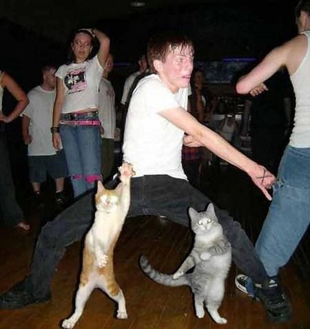 pisici danseaza