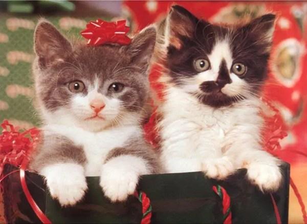 Cute Christmas Kittens 26 pics 1Funnycom