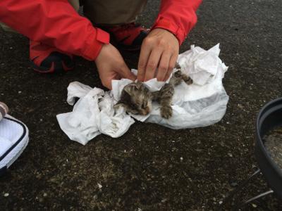 ずぶ濡れの子猫を拭く