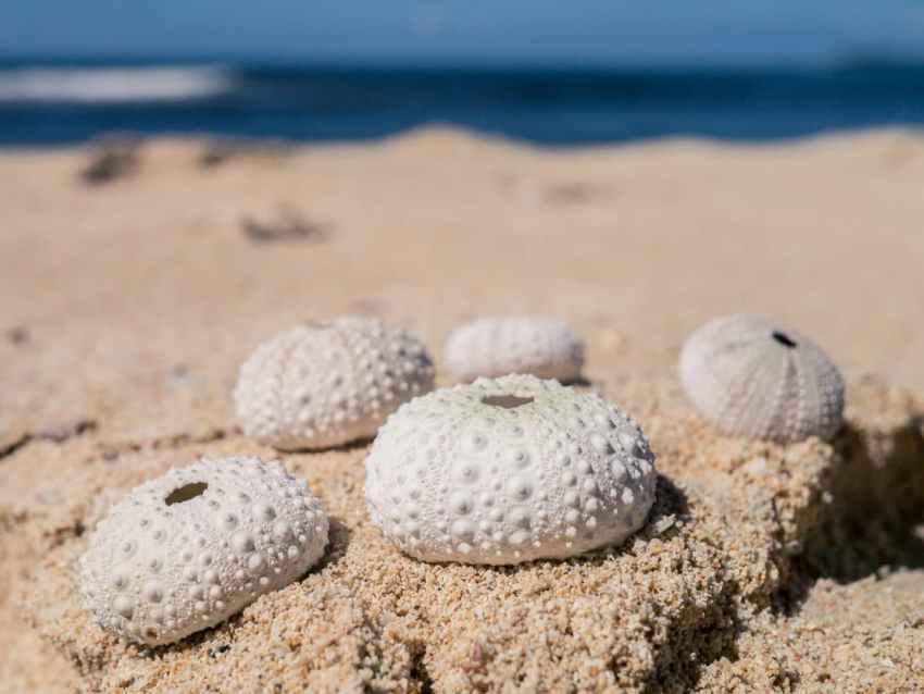 coquillages sable oursins plage