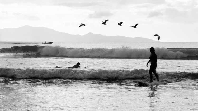 surf oiseau noir&blanc rencontre improbable