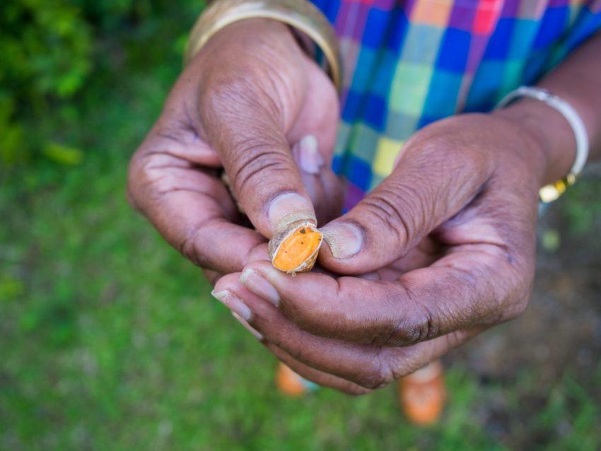 mains, jardin créole, rimed razié, guadeloupe
