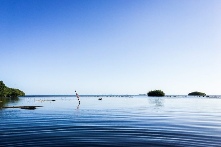 lagon, sainte rose, guadeloupe, kayak, mangrove, basse terre