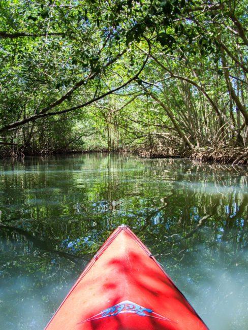 lagon, kayak, mangrove, ilet la biche, sainte rose, guadeloupe