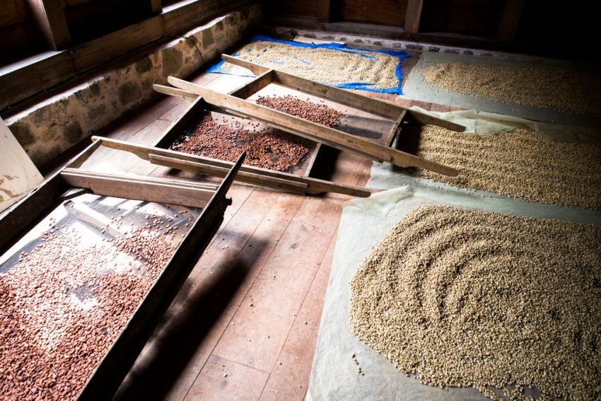 grivelière, café, cacao, vieux habitants, basse terre
