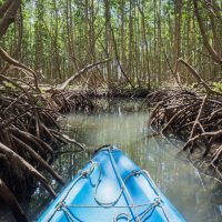 explorer la mangrove Guadeloupéenne en kayak