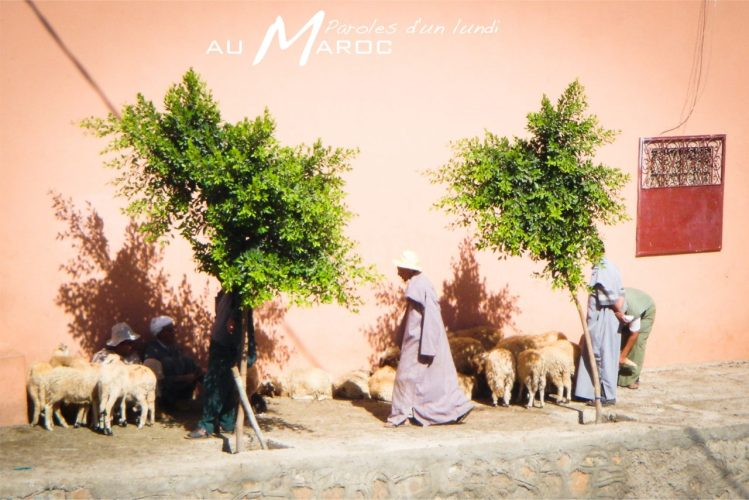 maroc, tafraout, anti-atlas